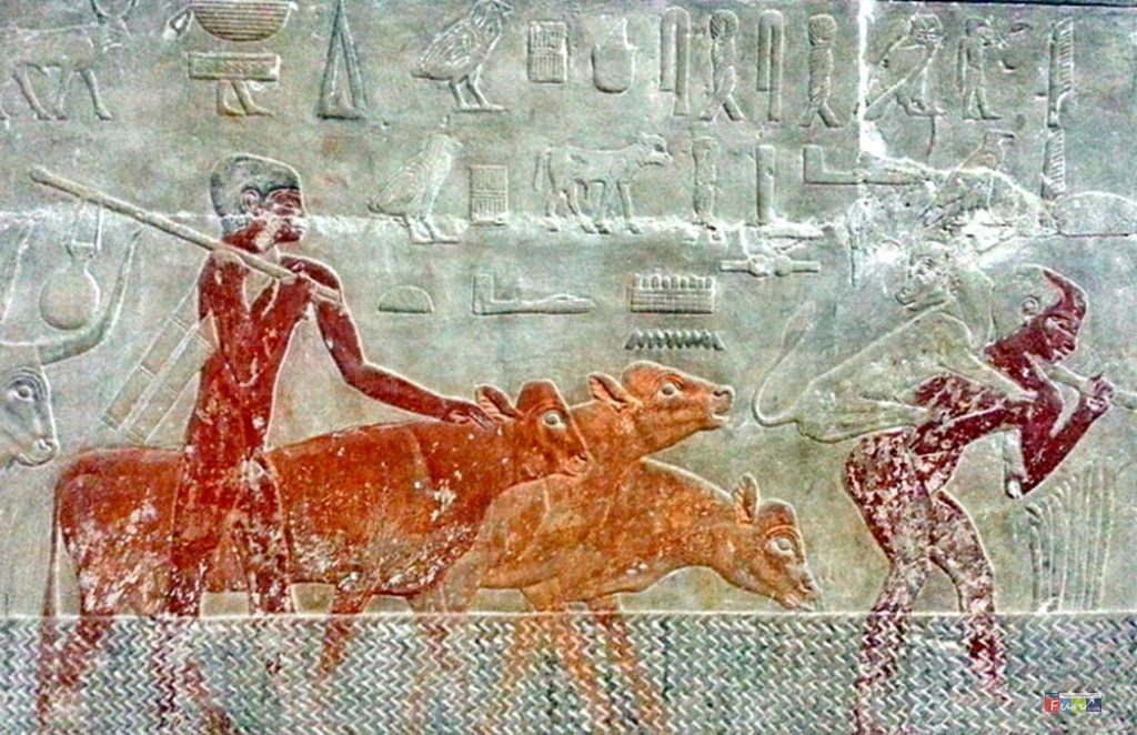 Is the Ancient Egyptian Race black or white - Egypt Fun Tours